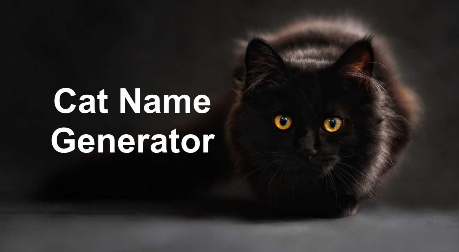 Cat Name Generator Image