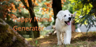 Puppy Name Generator