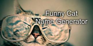Funny Cat Name Generator