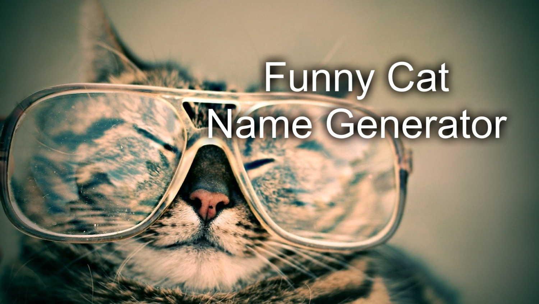 Funny Cat Name Generator Image