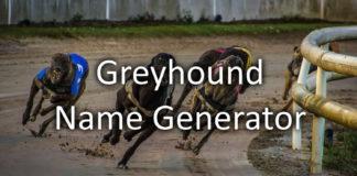 Greyhound Name Generator