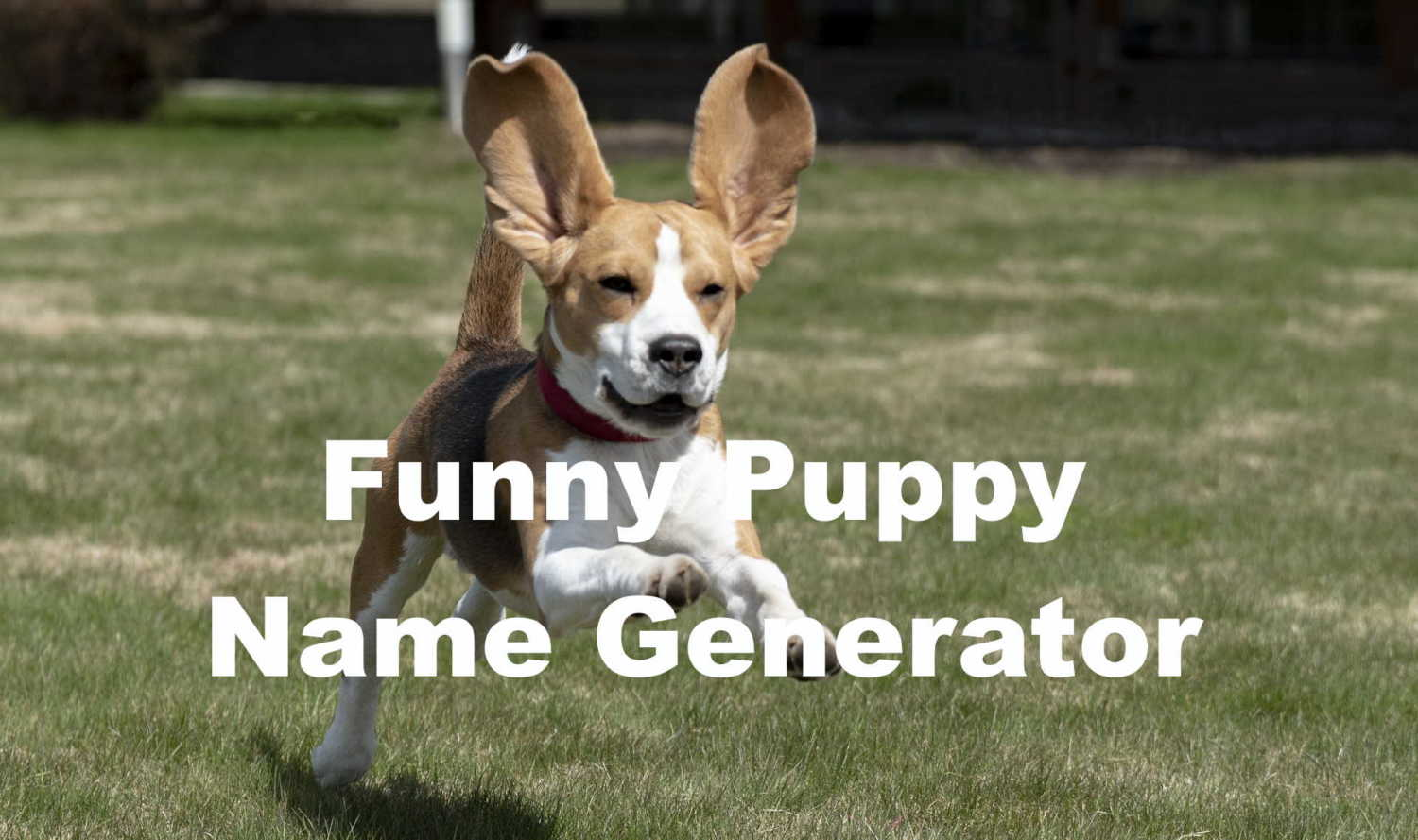 funny puppy name generator