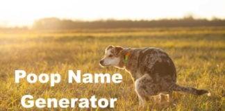Poop Name Generator