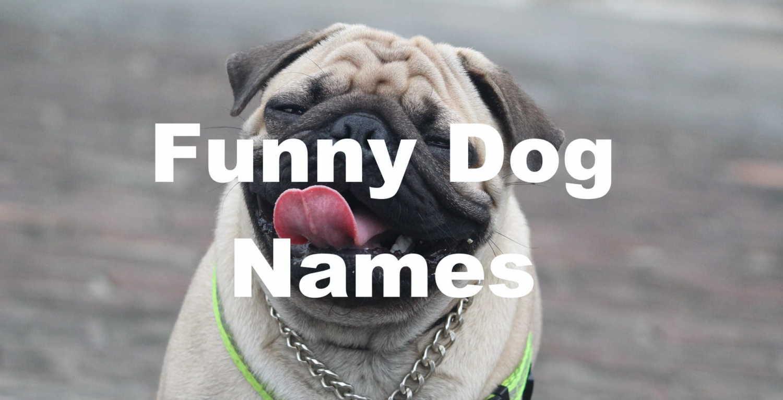 funny dog name generator