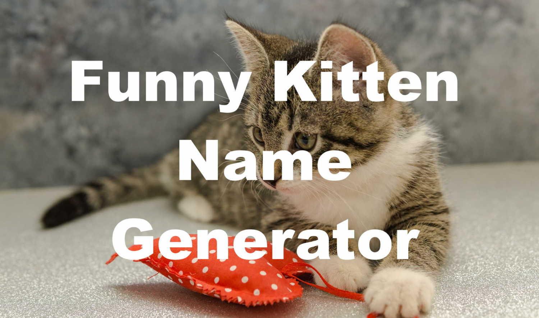 funny kitten name generator