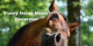 Funny Horse Name Generator